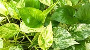 swr4 gartentipp die richtigen pflanzen für s bad tipps