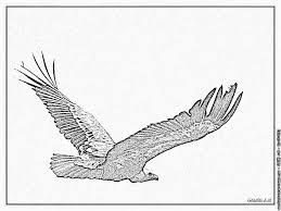 Coloriage Vautour 0909 à Imprimer Pour Les Enfants Dessin Oiseau