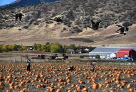 Denver Pumpkin Patch by Botanic Gardens At Chatfield Home Design Ideas And Pictures