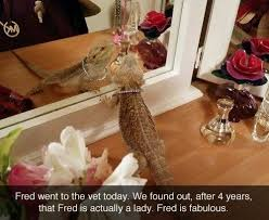 Bearded Dragon Heat Lamp Went Out by 89 Best Bearded Dragons Frodo Images On Pinterest Bearded Dragon