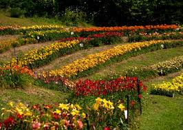 The Lily Barn   Townsend, Tennessee - Venue Report Townsend Barn Nursery Poulshot Devizes Home Facebook Big Sky Broker Listings 204 Best Rooms Images On Pinterest Ideas Babies Best 25 Pictures Country Barns Beauty The Lily Tennessee Venue Report Things To Do In Tn Near Cades Cove Smokies Posts 773 Succulent Ideas From Chattanooga 13 Fields Of Lilies That Remind You