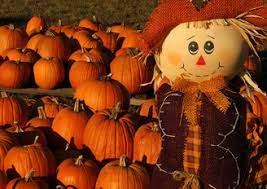 Grims Greenhouse Pumpkin Patch by Pumpkin Patches Hayrides And Corn Mazes In The Lehigh Valley
