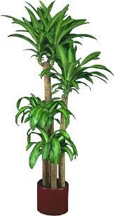 Good fice Plants Indoor Plants Money Plant Money Plant Small