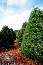 Indiana County Christmas Tree Growers Association