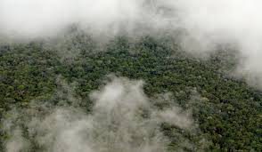 Charlie Brown Christmas Tree Amazon by The Amazon Makes Its Rainy Season And Is In Danger Says Nasa