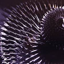 41 best ferrofluid images on pinterest magnets air ship and