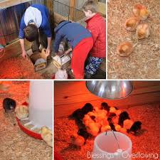 Tractor Supply Heat Lamp by We Have Chickens Again Blessings Overflowing