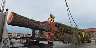 Christmas Tree Rockefeller Center Live Cam by Reno Casino U0027s Tallest Christmas Tree Cut Down By La Outlet Mall