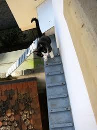 cat stairs apartment cat ladder