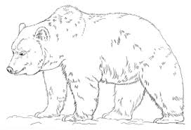 Click To See Printable Version Of Grizzly Bear Coloring Page