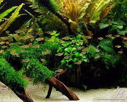 15 best Aquascape images on Pinterest