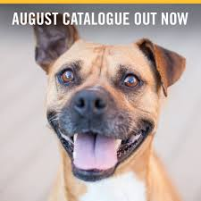 Petbarn - Our August Catalogue Is Out Now! Head In Store... | Facebook Royal Canin Maxi Ageing 8 Plus Dog Food 15kg Petbarn Gamma2 Vittles Vault Pet Storage 15lb Chewycom How To Request A Free Frontgate Catalog Aspen 3 Plastic House 5090lbs May Catalogue 9052017 21052017 New Precision Products Old Red Barn Large Shop Warehouse Buy Supplies Online Exo Terra Intense Basking Spot Lamp Joy Love Hope Cow Pull Thru Leg Toy Medium Accsories Kmart Door Design Interior Terrific Trustile Doors For You Me Flat Roof Kennel Brown