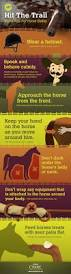 Best Horse Shedding Blade by 326 Best Horse Grooming Images On Pinterest Horse Stuff Horse