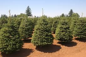Artificial Douglas Fir Christmas Tree by Artificial Christmas Trees Noble Fir There Are More Noble Fir Tree