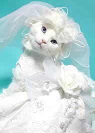 cat wedding dress cats in wedding dresses album on imgur