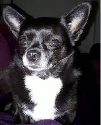 100 Where Is Chihuahua Located Ruby Located In Surrey London South East London