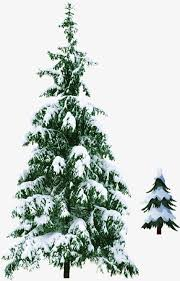 Green Christmas Tree With Snow Clipart PNG Image And