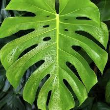plantes vertes d interieur 10 plantes assainissantes liste ooreka