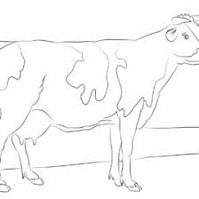 Holstein Cow Coloring Page Kids Drawing And Coloring Pages