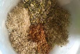Sprouted Pumpkin Seeds Phytic Acid by Sprouted Seeds For Horses The Naturally Healthy Horse