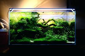 Aquarium Aquascape Design Ideas – Homedesignpicture.win Creative Cheap Aquarium Decoration Ideas Home Design Planning Top Best Fish Tank Living Room Amazing Simple Of With In 30 Youtube Ding Table Renovation Beautiful Gallery Interior Feng Shui New Custom Bespoke Designer Tanks 40 2016 Emejing Good Coffee Tables For Making The Mural Wonderful Murals Walls Pics Photos