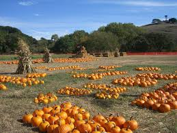 Patterson Pumpkin Patch Nc by Find Pumpkin Patches In California Pick Your Own Pumpkins