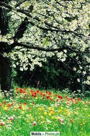 Beautiful Flower Wallpaper Nature Mobile