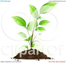 Clipart Illustration of a Seedling Plant With Drops Dew Scattered The Green Leaves Growing From A Pile Dirt by beboy