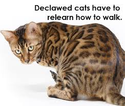 cost to declaw cat 8 reasons you should never declaw your cat what to do instead