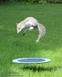 Squirrels Jumping On Trampoline Backyard Image With Excellent ... Skywalker Trampoline Reviews Pics With Awesome Backyard Pro Best Trampolines For 2018 Trampolinestodaycom Alleyoop Dblebounce Safety Enclosure The Site Images On Wonderful Buying Guide Trampolizing Top Pure Fun Of 2017 Bndstrampoline Brands Durabounce 12 Ft With 12ft Top 27 Reviewed Squirrels Jumping Image Excellent