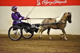 Canadian National Miniature Horse Show