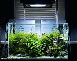 Aquarium Aquascaping The Nature Style Planted Tank Awards ... Aquascaping Nature Aquariums Of Zoobotanica 2013 Youtube Aquascape The Month November 2009 Riverbank Aquascaping Style Part 5 Roots By Papanikolas Nikos Awards Aquascapes Lab Tutorial River Bottom Natural Aquarium Plants The Planted Tank 40 Gallon Aquarium Everything About Incredible Undwater Art Cube Tanks Aquariums Dutch Vs How To A Low Tech Part 1