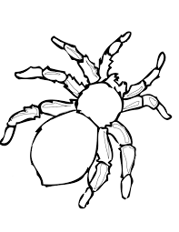 Spider Coloring Page Free Printable Pages For Kids Pictures