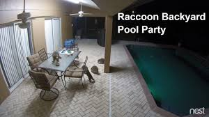 Raccoon Backyard Pool Party - YouTube How To Keep Wild Raccoons The National Wildlife Federation Blog Ecology Management Our Little Raccoon Luna Pinteres Health Inspectors Notebook Urban Wildlife Pet Diases That Great Raccoon In My Backyard Architecturenice Makeover Final Reveal Emily Henderson Animal Droppings Ask An Expert Beasts Login Critter Scat Pool Party Youtube Little On Deck A Rainy Day What Kind Of Are These I Want Protect My Rooster And