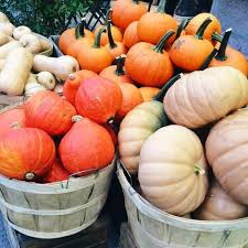 Pumpkin Picking Nyc 2014 by On My Radar The College Prepster