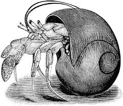 Halloween Hermit Crab Molting by Line Drawings Of Shells Hermit Crab Embroidery Pinterest
