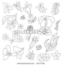 Black And White Hand Drawn Line Art Tropical Flowers Design Adult Coloring Book