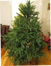 6ft Artificial Christmas Tree Bq by Bq 6ft Columbian Pine Christmas Tree For Sale In Lucan Dublin