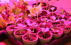 Grow Lights for Indoor Plants Getting Started Ideas & Advice