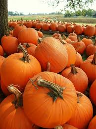 Pumpkin Patch Medford Oregon by 265 Best Things I Love Images On Pinterest Biblia Gift Ideas