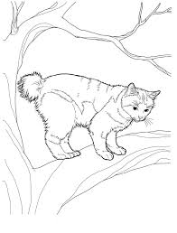 Cat 8 Cats Coloring Pages For Teens And Adults