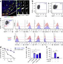 Ceilingprecise Function Excel by B Cell Homeostasis And Follicle Confines Are Governed By