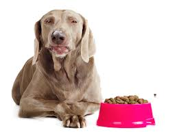 Do Long Haired Weimaraners Shed by 8 Best Dog Foods For The Weimaraner Diet Simply For Dogs
