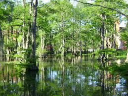 alligator bayou lake update louisiana cypress lake lafayette louisiana