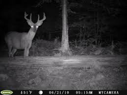 Couple Of Good Trail Cam Bucks (pics) - Buck Barn Allstate Barn Tour Central 2017iowa Foundation Choke Tubes Buck General Shelters Portable Storage Buildings 6 Bedroom Cabin Rental In Broken Bow Lake The Stops Here From My Front Porch To Yours Diy Crossbuckbarn Door Ding Room Sliding Doors Yard Great Country Garages Meet Greet Goats Gipop Acres Jos Monday Walk Simply Church Stretton Rtlessjo Off Work Ruffled Feathers And Spilled Milk