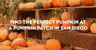 Pinery Bonita Pumpkin Patch by The Pinery Rancho Bernardo Pumpkin Patch
