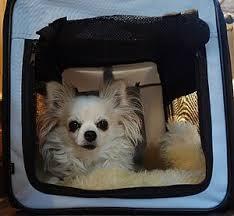 warum eine hundebox den alltag des familienhundes