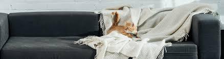 leben mit hund und katze 7 tipps für ein wohnzimmer mit