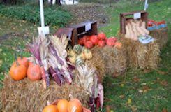 Emmaus Halloween Parade 2015 Pictures by 1803 House Events And Activities