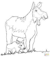 Coloring Book Vinyl Click Cow Moose Calf Ebay For Adults Amazon Full Size